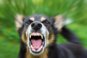 Dog Bite Attorney Indianapolis - Goodin Abernathy